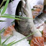 幻の魚イトウ イカゴロの塩漬け お取り寄せ青空レストラン通販 青森・鰺ヶ沢町